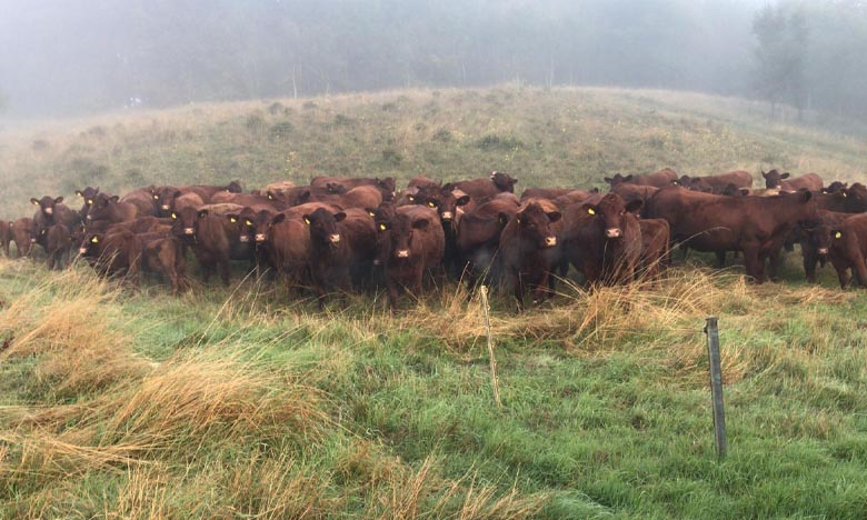 First calvers waiting for the fog to lift