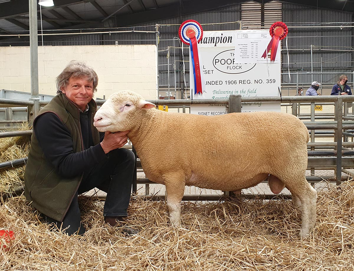 Poorton Cupid, The Champion Ram
