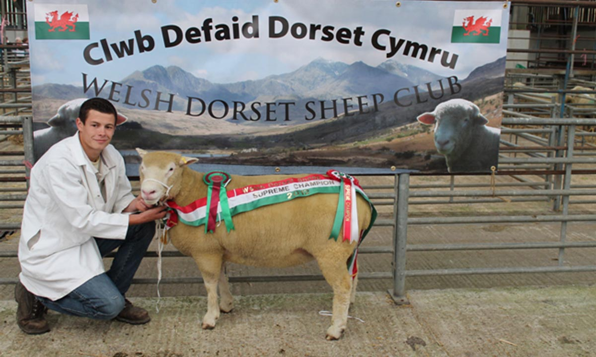 Blackhill Wins at Llandovery Sale 2012
